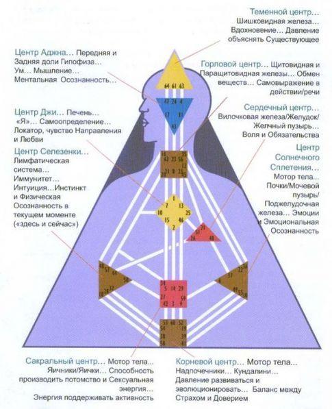 bodigraf-tsentryi-organyi